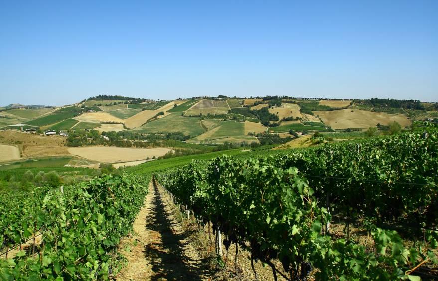 giardino delle viti - tenuta Montecatone